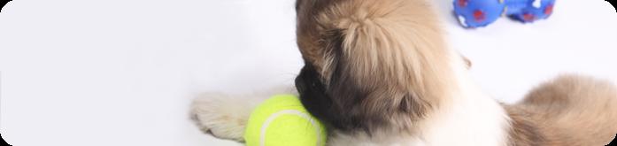 Brincadeiras Divertidas para Cães