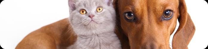 Como Socializar C�es e Gatos?