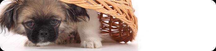 Comportamentos caninos: Mitos e Verdades