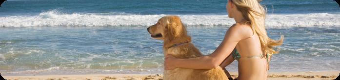 Cuidados com seu Cão no Verão