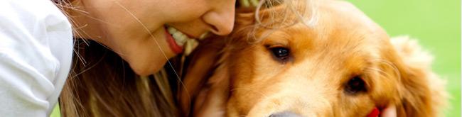 Dermatite canina �o que � e como tratar?