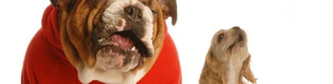 Erros na hora de alimentar seu cachorro
