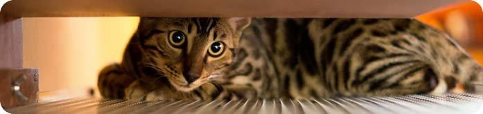 Gatos com Problemas Renais