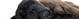 Hepatite em Cães - Sintomas e tratamentos