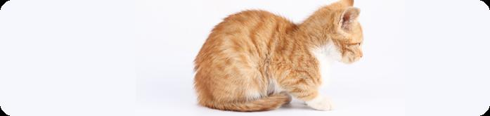 Infec��es Intestinais em Gatos