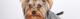 Problemas intestinais em cães – como tratar?
