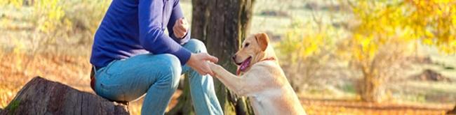 Quais são as vitaminas essenciais para cães?