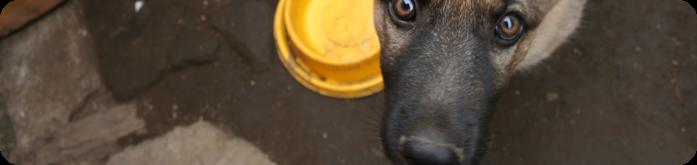 Qual a Ração mais Indicada para Cães?