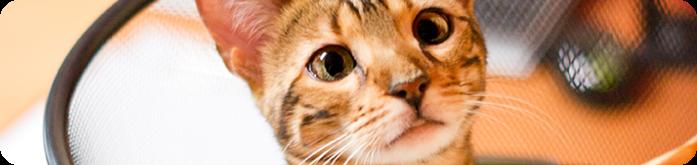 Qual a Ra��o mais Indicada para Gatos?