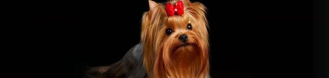 Ração Grain Free para cães de raças pequenas