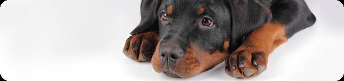 Ração Hipoalergênica para Cães