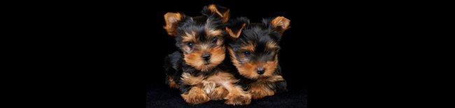 Ração não transgênica para cães