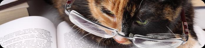 Ra��o para Gatos Idosos