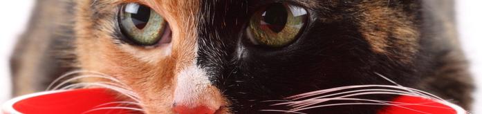 Ra��o Super Premium para Gatos Obesos
