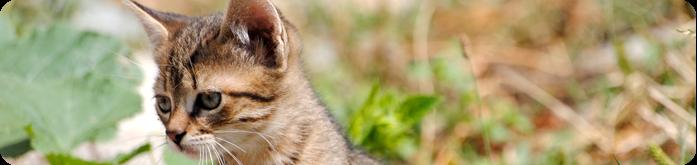Ra��es para Gatos: O que Influencia o Apetite do seu Felino?