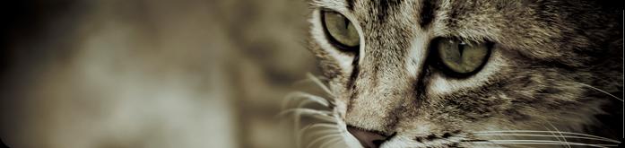 Ra��es para Gatos