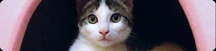 Tipos de Rações para Gatos