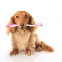 Tártaro em cães e gatos: Como surge? Como prevenir? Como tratar?