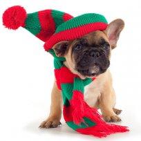 O frio chegou: Cuidados especiais com o seu cão ou gato no inverno