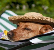 Pet Friendly: Lugares onde o seu cão ou gato são muito bem-vindos.