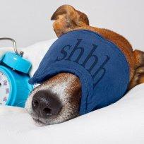 Spa: Um luxo disponível para cães e gatos