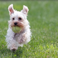 Snacks Freeze Dried Nutrition – Um lançamento incrível para o seu cão ter vida longa, saudável e feliz.