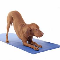 Yoga para cães