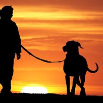Vamos passear? Um bom passeio com seu cão faz bem para todos.