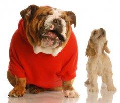 Seu cão late muito?