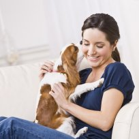 Animais de apartamento: O que fazer para n�o ficarem estressados?