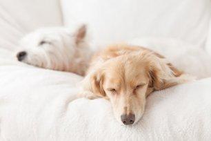 C�o com sono agitado? - Como ajudar o seu cachorro a dormir melhor