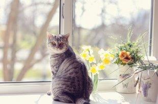 Dicas para felinos: Como tornar a casa segura para um gato?