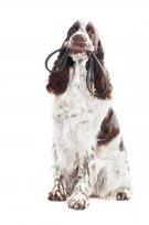 Tudo o que você precisa saber sobre Dogwalkers