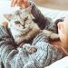 Queda de pelos: tudo sobre alopecia em gatos