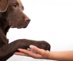 O que é Disfunção Cognitiva Canina?