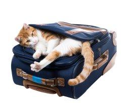 Hotel ou Pet Sitter? Conhe�a as vantagens e desvantagens e decida onde deixar seu gato