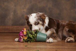 Lista: Atitudes que incitam a desobedi�ncia no seu cachorro. Quais erros seus est�o afetando o comportamento do seu pet?