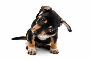 Superpoderes? Você não vai acreditar no que seu cãozinho é capaz!