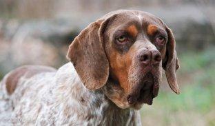 Onze ra�as de cachorros que voc� ainda n�o conhece! Saiba mais sobre elas.
