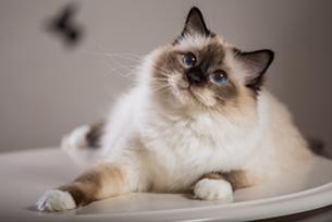 10 sinais de c�ncer em gatos. Como proteger o seu?