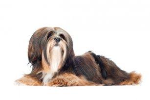 5 soluções para o dilema de ter cachorro e trabalhar fora.
