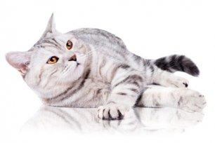 Como evitar problemas de pele e pelagem no seu felino