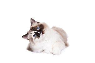 Gatos que tem o costume de fazer xixi em lugares estranhos