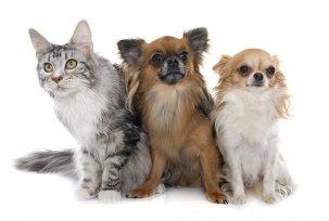 Sabe qual o momento certo para fazer a troca de ração do pet?