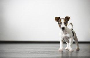 5 elementos que ajudam a identificar a causa da diarreia em cães