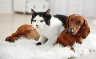 C�es e Gatos podem ser doadores de sangue: ajude a salvar uma vida animal