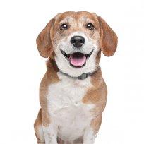 Dá um sorriso cãozinho!