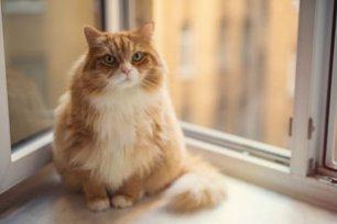 Cuidar de gatos obesos