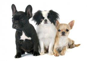 Melhor ração para cães pequenos