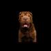 Melhor ração hipoalergênica para cães
